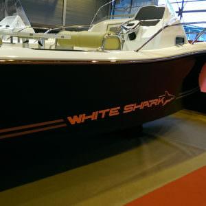 Doming white shark